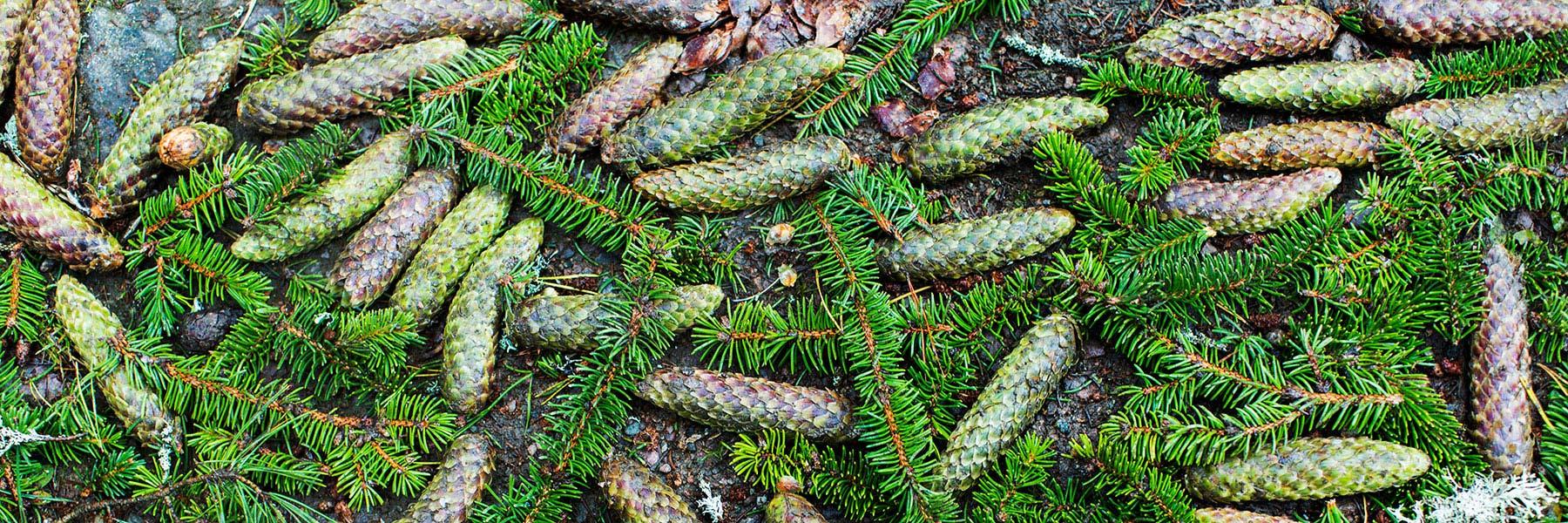 Grön skogsbruksplan