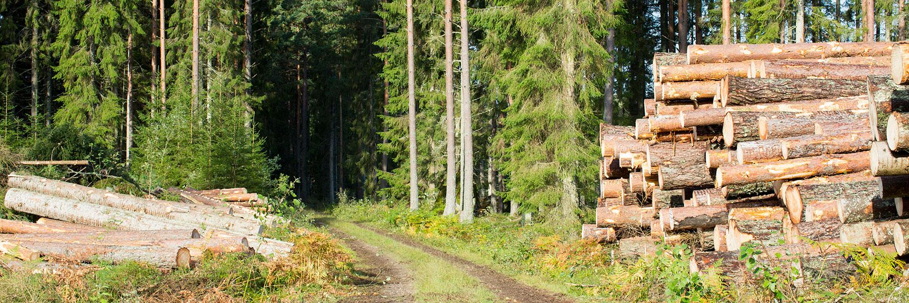Sälja skog & virke