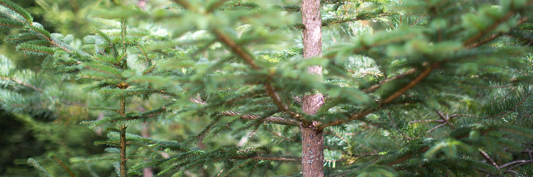 Jobba i modern svensk skogsindustri