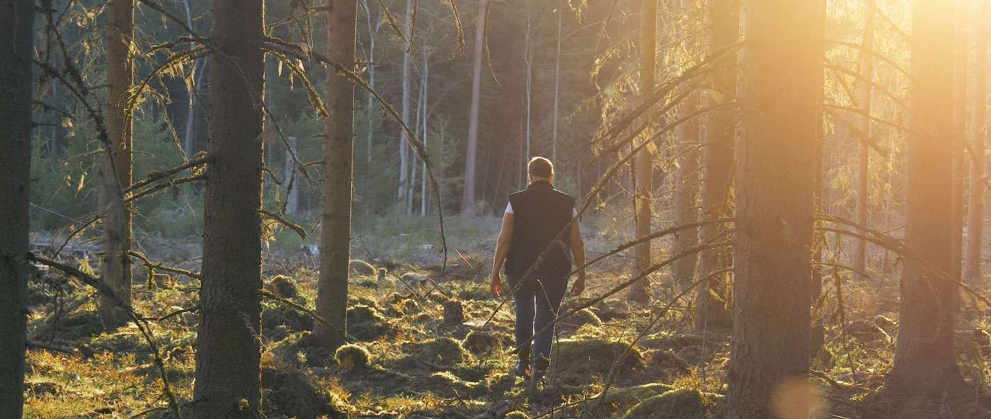 Om Vida Skog
