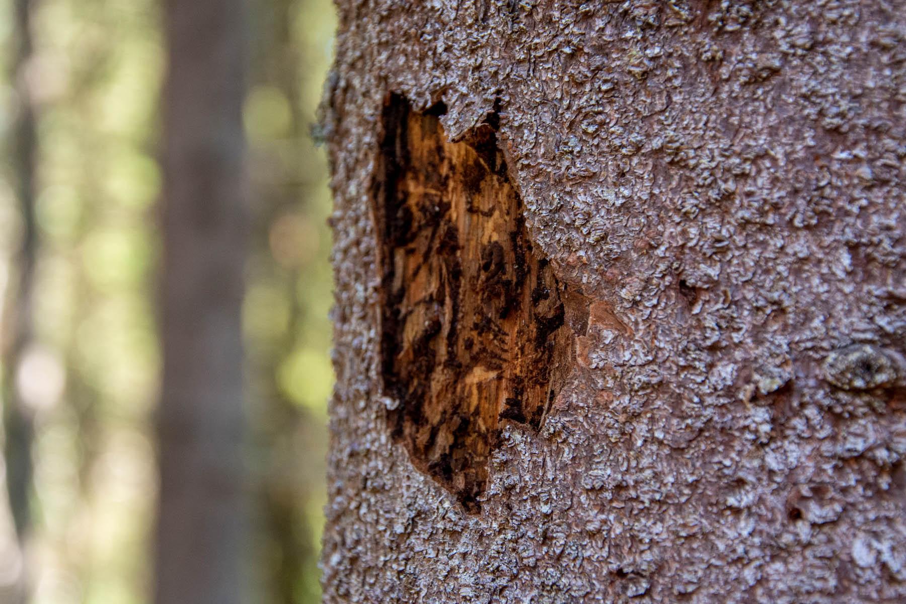 Uppdatering om barkborresituationen