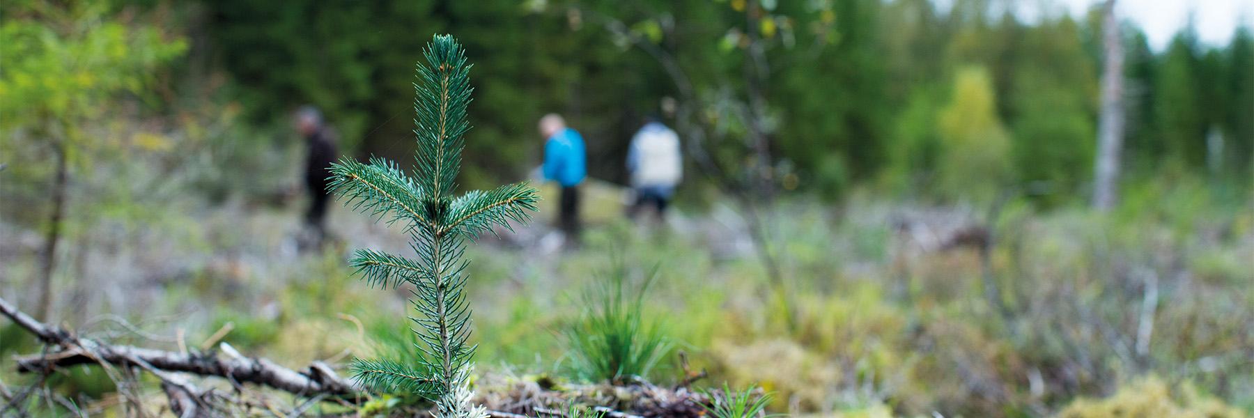 Utbildning för dig som vill lära dig mer om skog