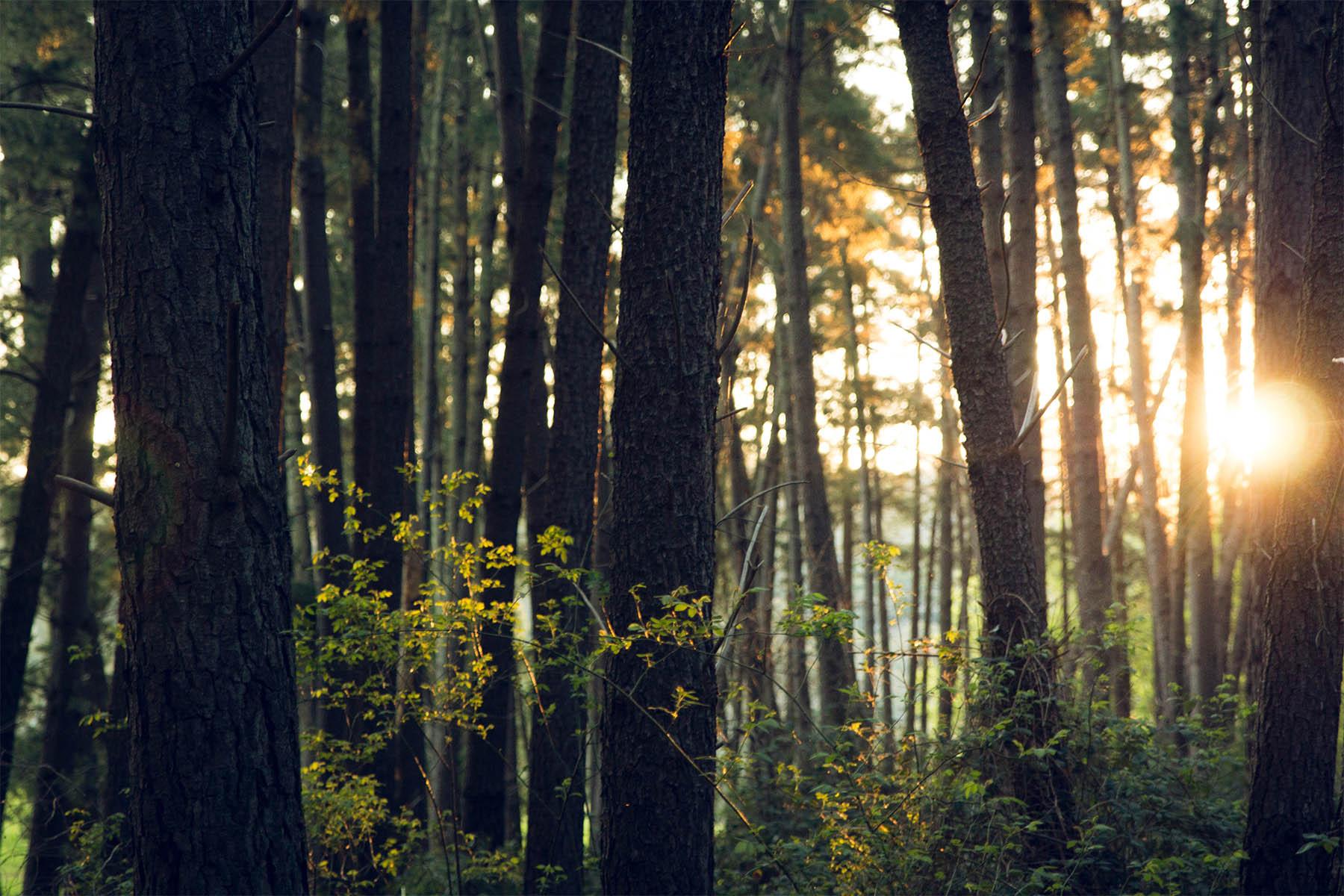 Prosilva tar över hanteringen av certifierade skogsägare