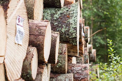 Aktivt skogsbruk, året runt!